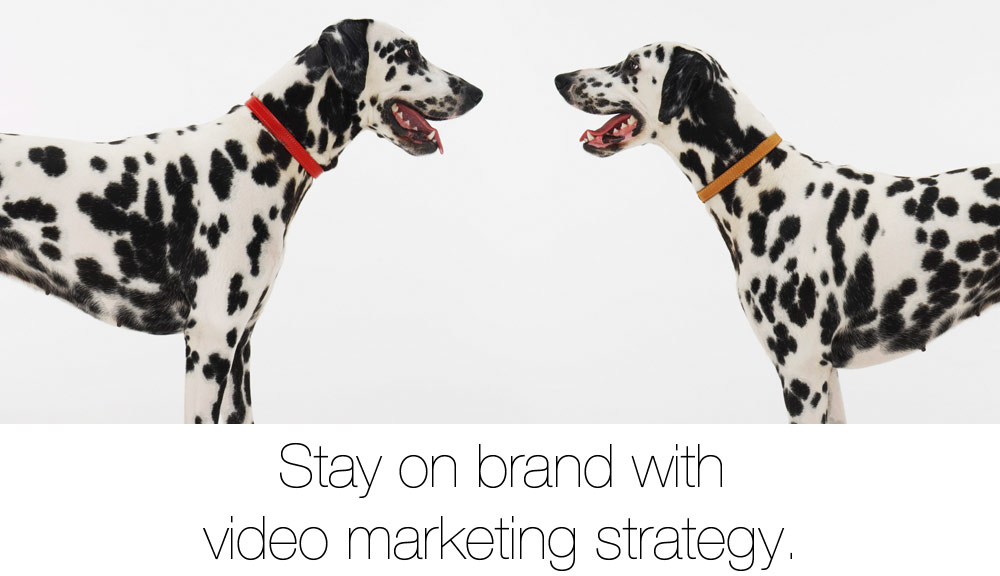 video-marketing-strategy-for-business_1000x576